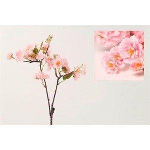 Prunus Zweig Fim S rosa