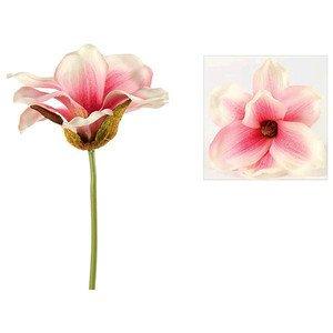 Magnolie 28 cm Mitchele rosa