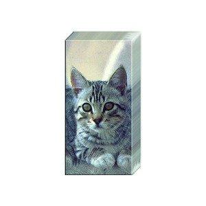 Papiertaschentücher Cuddle Cat IHR