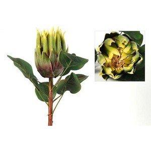 Protea Gitta grün/crème