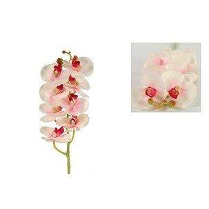 Orchidee Des S rosa