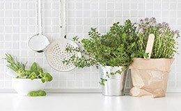 Küchenkräuter richtig pflegen, ernten und zubereiten