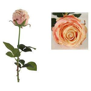 Rose Debby rosa